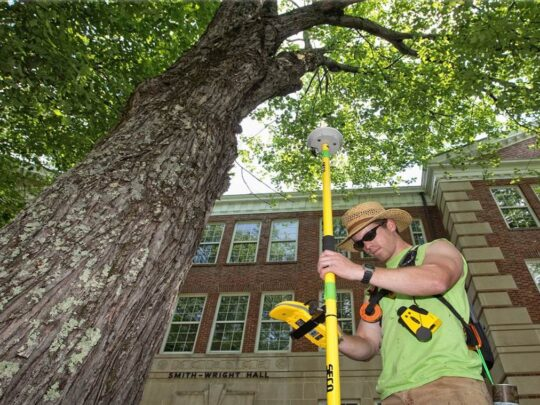 Arborist Consultations-Seffner FL Tree Trimming and Stump Grinding Services-We Offer Tree Trimming Services, Tree Removal, Tree Pruning, Tree Cutting, Residential and Commercial Tree Trimming Services, Storm Damage, Emergency Tree Removal, Land Clearing, Tree Companies, Tree Care Service, Stump Grinding, and we're the Best Tree Trimming Company Near You Guaranteed!