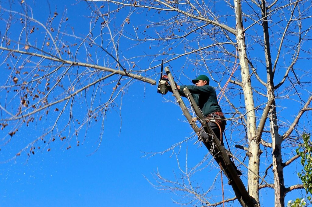 Contact Us-Seffner FL Tree Trimming and Stump Grinding Services-We Offer Tree Trimming Services, Tree Removal, Tree Pruning, Tree Cutting, Residential and Commercial Tree Trimming Services, Storm Damage, Emergency Tree Removal, Land Clearing, Tree Companies, Tree Care Service, Stump Grinding, and we're the Best Tree Trimming Company Near You Guaranteed!