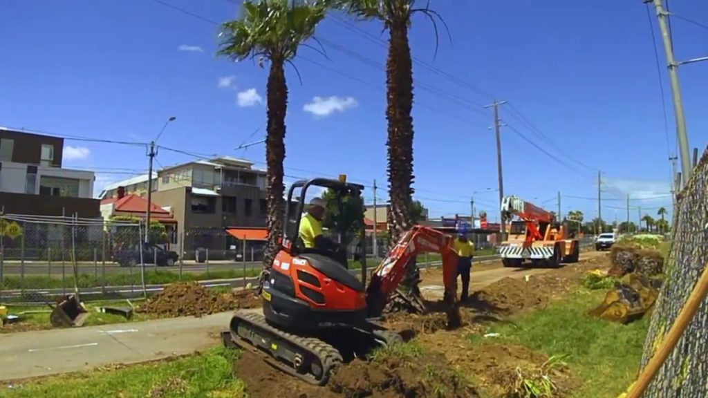 Palm Tree Removal-Seffner FL Tree Trimming and Stump Grinding Services-We Offer Tree Trimming Services, Tree Removal, Tree Pruning, Tree Cutting, Residential and Commercial Tree Trimming Services, Storm Damage, Emergency Tree Removal, Land Clearing, Tree Companies, Tree Care Service, Stump Grinding, and we're the Best Tree Trimming Company Near You Guaranteed!