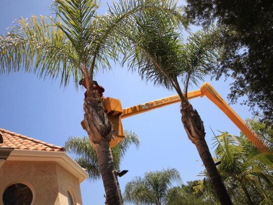 Palm Tree Trimming-Seffner FL Tree Trimming and Stump Grinding Services-We Offer Tree Trimming Services, Tree Removal, Tree Pruning, Tree Cutting, Residential and Commercial Tree Trimming Services, Storm Damage, Emergency Tree Removal, Land Clearing, Tree Companies, Tree Care Service, Stump Grinding, and we're the Best Tree Trimming Company Near You Guaranteed!