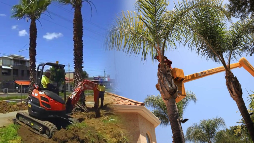 Palm tree trimming & palm tree removal-Seffner FL Tree Trimming and Stump Grinding Services-We Offer Tree Trimming Services, Tree Removal, Tree Pruning, Tree Cutting, Residential and Commercial Tree Trimming Services, Storm Damage, Emergency Tree Removal, Land Clearing, Tree Companies, Tree Care Service, Stump Grinding, and we're the Best Tree Trimming Company Near You Guaranteed!