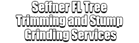 Seffner FL Tree Trimming and Stump Grinding Services Logo-We Offer Tree Trimming Services, Tree Removal, Tree Pruning, Tree Cutting, Residential and Commercial Tree Trimming Services, Storm Damage, Emergency Tree Removal, Land Clearing, Tree Companies, Tree Care Service, Stump Grinding, and we're the Best Tree Trimming Company Near You Guaranteed!