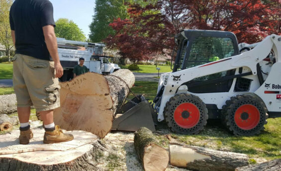 Services-Seffner FL Tree Trimming and Stump Grinding Services-We Offer Tree Trimming Services, Tree Removal, Tree Pruning, Tree Cutting, Residential and Commercial Tree Trimming Services, Storm Damage, Emergency Tree Removal, Land Clearing, Tree Companies, Tree Care Service, Stump Grinding, and we're the Best Tree Trimming Company Near You Guaranteed!