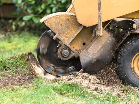 Stump Grinding-Seffner FL Tree Trimming and Stump Grinding Services-We Offer Tree Trimming Services, Tree Removal, Tree Pruning, Tree Cutting, Residential and Commercial Tree Trimming Services, Storm Damage, Emergency Tree Removal, Land Clearing, Tree Companies, Tree Care Service, Stump Grinding, and we're the Best Tree Trimming Company Near You Guaranteed!