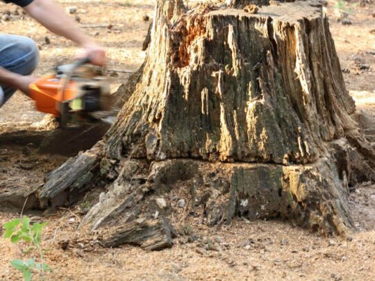 Stump Removal-Seffner FL Tree Trimming and Stump Grinding Services-We Offer Tree Trimming Services, Tree Removal, Tree Pruning, Tree Cutting, Residential and Commercial Tree Trimming Services, Storm Damage, Emergency Tree Removal, Land Clearing, Tree Companies, Tree Care Service, Stump Grinding, and we're the Best Tree Trimming Company Near You Guaranteed!