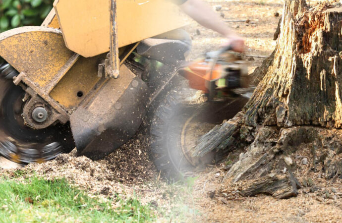 Stump grinding & removal-Seffner FL Tree Trimming and Stump Grinding Services-We Offer Tree Trimming Services, Tree Removal, Tree Pruning, Tree Cutting, Residential and Commercial Tree Trimming Services, Storm Damage, Emergency Tree Removal, Land Clearing, Tree Companies, Tree Care Service, Stump Grinding, and we're the Best Tree Trimming Company Near You Guaranteed!