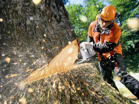 Tree Cutting-Seffner FL Tree Trimming and Stump Grinding Services-We Offer Tree Trimming Services, Tree Removal, Tree Pruning, Tree Cutting, Residential and Commercial Tree Trimming Services, Storm Damage, Emergency Tree Removal, Land Clearing, Tree Companies, Tree Care Service, Stump Grinding, and we're the Best Tree Trimming Company Near You Guaranteed!