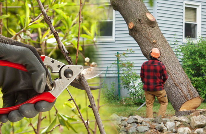 Tree pruning & tree removal-Seffner FL Tree Trimming and Stump Grinding Services-We Offer Tree Trimming Services, Tree Removal, Tree Pruning, Tree Cutting, Residential and Commercial Tree Trimming Services, Storm Damage, Emergency Tree Removal, Land Clearing, Tree Companies, Tree Care Service, Stump Grinding, and we're the Best Tree Trimming Company Near You Guaranteed!